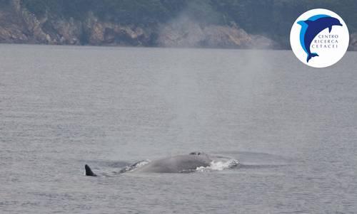 balena elba mare delfini