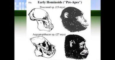 L'alba dell'uomo dai primi ominidi all'uomo di Neanderthal