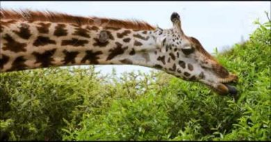 Lezione sul romanzo Le lacrime della giraffa